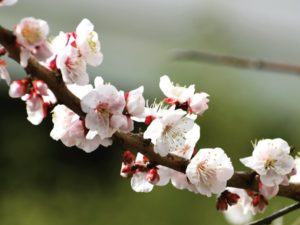 春の息吹き!